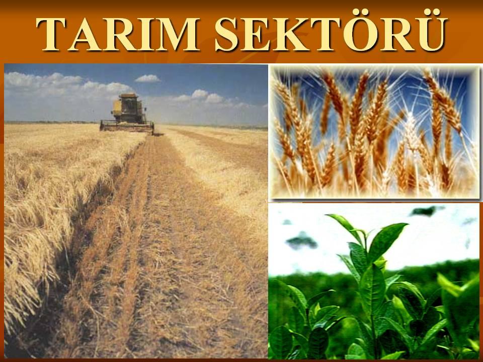 TR-AB Gümrük Birliğinin Güncellenmesi Tarım Sektörü Hakkında