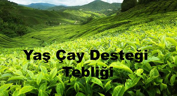 Yaş Çay Desteği  Tebliği