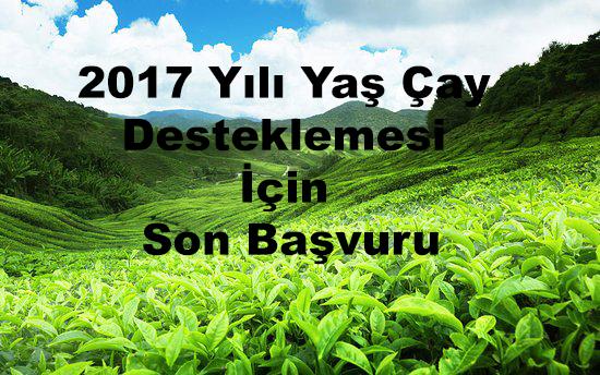 2017 Yılı Yaş Çay Desteklemesi İçin Son Başvuru